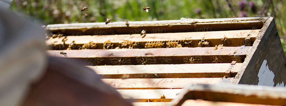 Honey bees in Southern Illinois. Photo by: Matthew McGuire