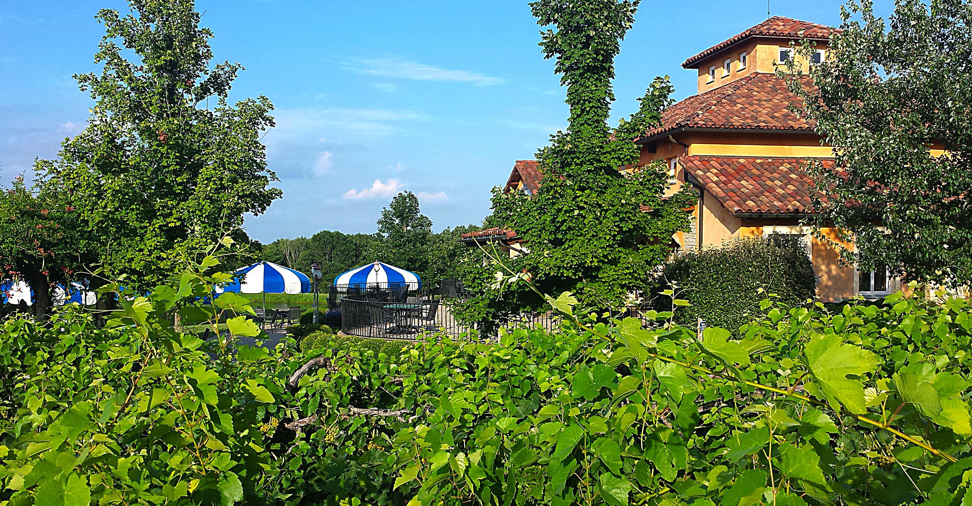 Blue Sky Winery, Makanda, Illinois on 08/03/15. Photo by: Matthew McGuire