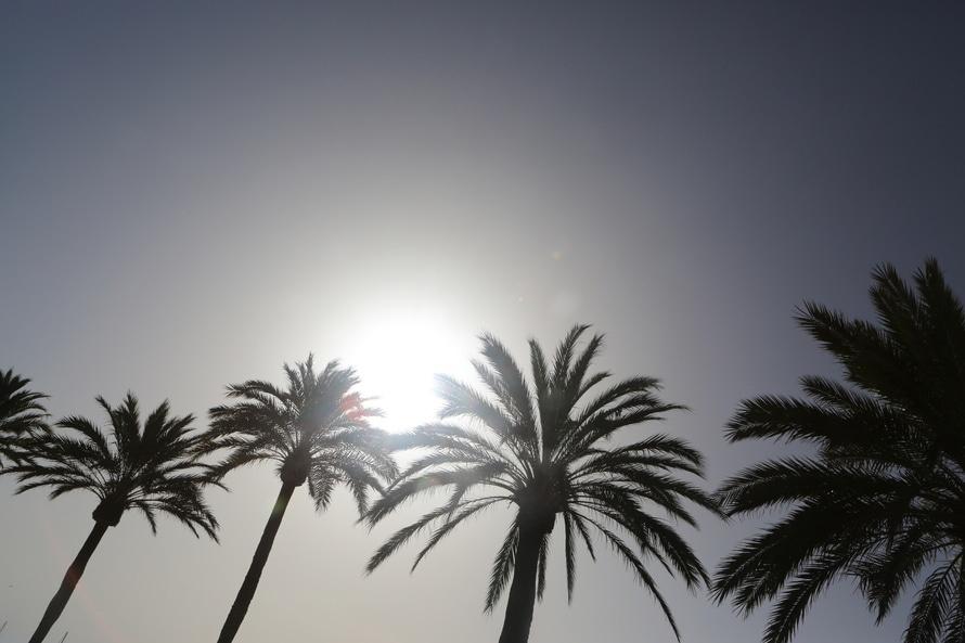Palm trees receiving solar power. Photo by: lifeofpix.com