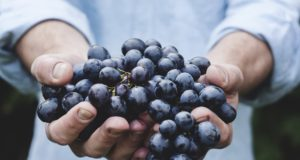 Grapes. Photo by: pexels.com/unsplash.com