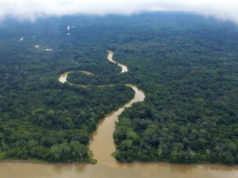 The Amazon River, as featured in 'The River Below.' Photo credit: Helkin René Diaz. Photo provided by: Tribeca Film Festival