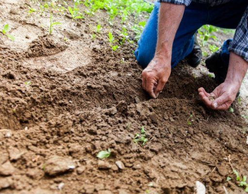 A farmer planting seeds in the ground. Photo by: Binyamin Mellish / Pexels.com