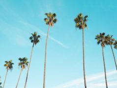 Palm tree and clear skies. Photo by: Pexels.com