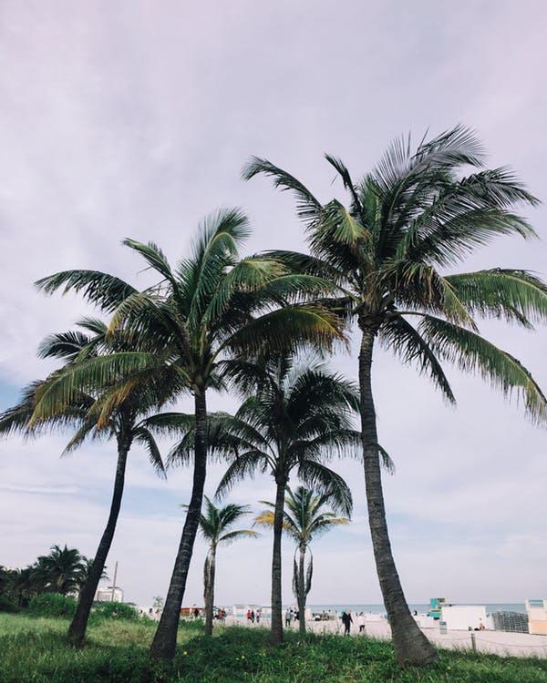 Miami Beach. Photo by: Pexels.com