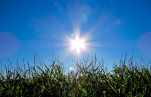 The sun over cropland. Photo by: Pexels.com