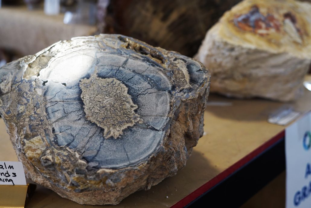 Gem Show Petrified Wood. Photo by: RJ Harvey